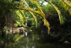 Aveiro - 04-07-2012 (DNS Fotografía) Tags: parque portugal sony dani pedro estanque 1855 palomar sel infante aveiro c3 nex teis ilhavo nidazo