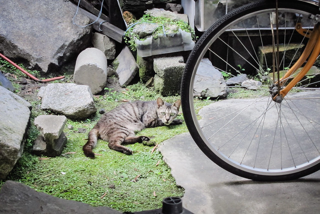 Today's Cat@2012-07-15