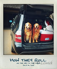 how they roll (Dave (www.thePhotonWhisperer.com)) Tags: road trip dog goldenretriever polaroid golden cabin space it cargo retriever shake cooler suv app iphone