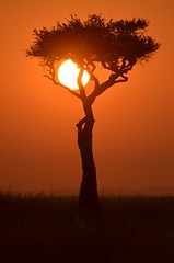 (flipper2047) Tags: sunset kenya masaimara sigma50500 d7000