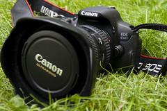 Canon 650D - Canon T4i (Piotr Kowalski) Tags: canon photography photo foto fotografia dslr lustrzanka canon650d vdslr canont4i