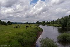 River Dee Wales (KLAVIeNERI) Tags: bridge green wales photography holt riverdee farndon leicaforum leicax1 leicaimages ilovemyleica photographersontumblr