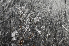 givre 15 (Ben Piaget) Tags: nature canon ben hiver neige blanc froid glace givre piaget