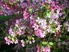 Liebster Vater, ich erschein und will mich (amras_de) Tags: flower fleur flor blomma blume fiore blüte blomst virág lore bloem blóm çiçek floro kwiat flos ciuri kvet kukka cvijet flouer bláth cvet zieds õis floare blome žiedas