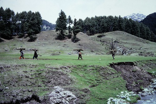 Women carrying wood near Aru, Kashmir