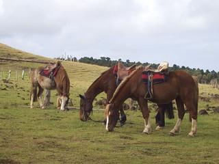 Ballade Equestre sur la Maunga Terevaka