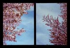 2016-04--05 - Olympus Pen EE - Kodak Ektar 100-05 (sarajoelsson) Tags: city urban color film analog pen spring diptych sweden stockholm snapshot olympus ishootfilm analogue halfframe everydaylife filmgrain vardag 2016 filmphotography penee filmisnotdead halvformat diptyk teamframkallning digitizedwithdslr