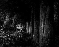 (Nico_1962) Tags: bos bomen zwartwit landschap nederland overijssel soeslo leica m240 summicron rangefinder bw thenetherlands manualfocus leicam summicron50mm