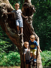 Stefan, Luka & Adam (3.5y old) (Micha Olszewski) Tags: geographicalfeatures unitedkingdom england luka adamolszewski people forest greaterlondon land family europe eppingforest stefan prezes