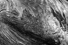 Aged, One (Jeremy Brooks) Tags: abstract bw bark blackwhite blackandwhite california carmelvacationwinter2015 monterey montereycounty nature texture tree usa camera:make=fuji camera:make=fujifilm camera:model=xpro1