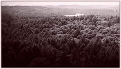 Over Algonquin (2) (toddrappitt) Tags: scenery scenic august monochrome breathtakinglandscapes vegetarian6 trees forest woods provincialparks canada ontario algonquinpark t4i rebel canon