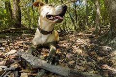 Pantano Tibidabo (Oscar Castella) Tags: roca montaa perro animal bosque sendero palo jugar verde tronco sucio collar