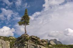 Lonesome (thunderbird-72) Tags: wolken baum sterreich gandasee alps austria vorarlberg berge felsen tree sommer alpen rocks gargellen at