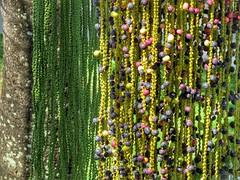 Texture (Mag Sa) Tags: colorful textura palmtree sunlight nature natureza texture