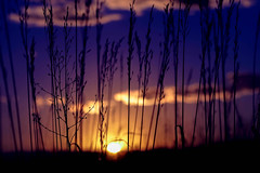 Even as a dream. (miss.interpretations) Tags: evening sunset sun prairie grass reeds purple blue rays magic thoughts solitude mediation thoughtful thankful missingsomeone loss profound quotes euripides theend canonm3 clouds sky skies glow tallgrass
