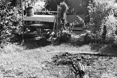 Wenn der Gartner streikt... # Image033_N33 # Nikon F3 Nikkor 35-70 Agfa APX100 Negativ - Aug 2016 (irisisopen f/8light) Tags: nikon f3 nikkor 3570 agfa apx100 negativ schwarzweiss bw black white analog irisisopen