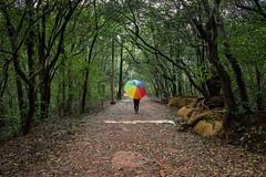 Matheran-4929 (Satish Chelluri) Tags: satishchelluri satishchelluriphotography matheran maharastra umbrella mansoon