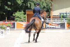 IMG_8276 (dreiwn) Tags: dressage dressur dressuur pferd reitturnier turnierreiten pferdesport horse horseback horseriding equestrian reitverein dressurprfung kandare doublebridle reiten pferde reitplatz ridingarena