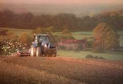 The turning of the Sussex seasons (prueheron) Tags: field ploughing farmer sussex ditchling plough tractor birds seagulls nature autumn