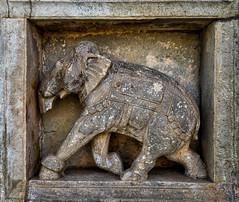 Elephant detail - Chaurasi Khambon ki Chhatri  Cenotaph - Bundi - Rajasthan (MelissaFileppi) Tags: rajasthan bundi cenotaph chaurasi khambon ki chhatri carving elephant