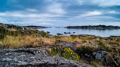 The bay where I sit on the rocks with the gummy weed and reflect (island deborah- nature website deborahfreeman.ca- ) Tags: islands nanoose bay autumn