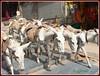 Survival (Kquester) Tags: kali mandir pavagadh mahakali maakali shaktipeeth