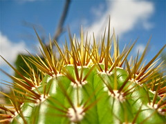 beware the thorns of the cactus (mck66) Tags: summer cactus green spiky thorns succulente cactacee