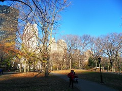 New York(815)