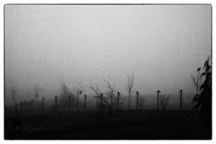 The Crows (photos by Crow) Tags: mist birds canon flock thebirds crows alfredhitchcock scarymovies carolrukliss photosbycrow