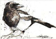 magpie IV (Jennifer Kraska) Tags: bird art sketch jennifer doodle magpie kraska jenniferkraska