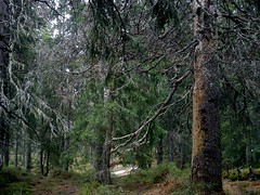 narnia (miradel) Tags: wood old light wild mountains beauty forest natural path fresh thoughts narnia simplicity moment simple mira tatra