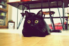 Unikko (muuuuuuuuumi) Tags: cute cat chat kitty gato kawaii katze   kissa    youtube