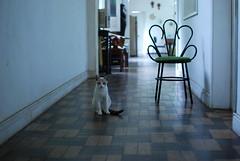 (Natlia Viana) Tags: cute home sweet gato natliaviana