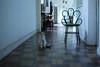 ♥ (Natália Viana) Tags: cute home sweet gato natáliaviana