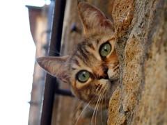 Cu cu (lo.tangelini) Tags: catnipaddicts