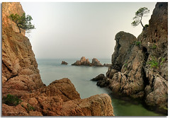 Pins entre cales (Retalls de Vida) Tags: costa catalonia catalunya brava costabrava catalua cala canyet calacanyet