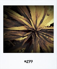 """#DailyPolaroid of 1-7-12 #277 • <a style=""""font-size:0.8em;"""" href=""""http://www.flickr.com/photos/47939785@N05/7489129260/"""" target=""""_blank"""">View on Flickr</a>"""