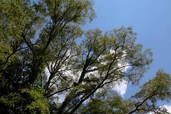 West Virginia 6-12-554 (Cwrazydog) Tags: thomas stewart westvirginia davis parsons blackwaterfalls elkins grafton philippi belington morantown