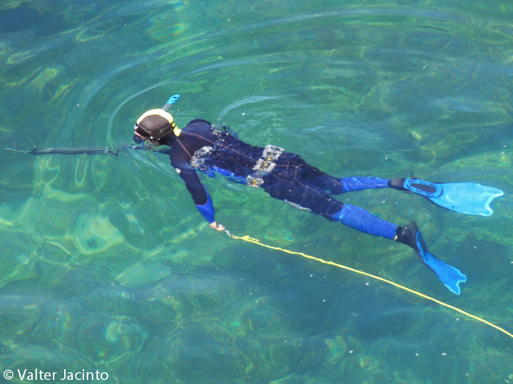 The World's Best Photos of portugal and spearfishing