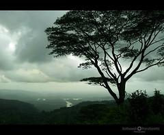 peppara dam1 (Satish Pandiyattil) Tags: landscape scenery kerala bonacaud bonakkad pepparadam