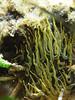 Tentacoli (Salvo.do) Tags: sea canon marine rocks mare underwater tide anemone spiaggia waterproof agrigento scogli d10 alghe licata