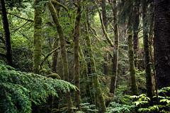 forest grove (jody9) Tags: coastrange astoria oregon mossy forest green