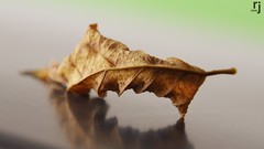 A Dry Leaf (RJ-Clicks) Tags: leaf autumn dry dryleaf green orange yellow reflection macro bokeh bokehphotography macrophotography