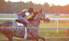 Carrumba at Saratoga (Rock and Racehorses) Tags: webcarrumbaska3502page2sarahandrew phipps carrumba ny thoroughbred racehorse saratoga nyra