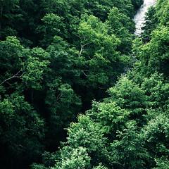 River (hisaya katagami) Tags: hasselblad500cm 120film fujifilm pro400h outdoor photography river landscape green