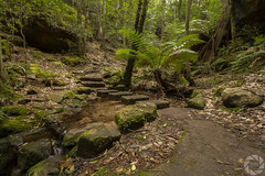Midst of the Nature (pradeep2471989) Tags: bushwalking grandcanyonwalk blackheath australia naturelandscape naturewalk hikingtrail landscapephotography