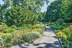 Heather Garden (albyn.davis) Tags: garden nature path green flowers light sunlight trees park nyc newyorkcity city urban