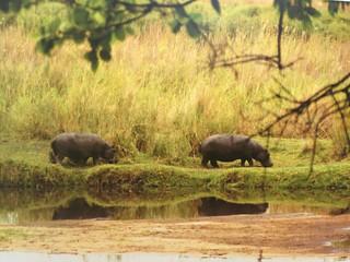 Namibia Dangerous Game Safari - Caprivi Strip 86