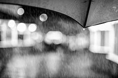 British Summer Time (Martzimages) Tags: martzimages mono monochrome blackandwhite rain umbrella bokeh hmbt wet raindrop