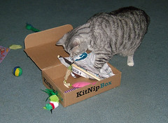 Our first KitNip box! (PannaLover326) Tags: cat cats tabby tabbies sassy